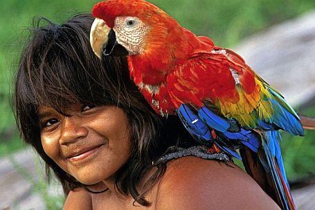 Arara mit Ara Papagei